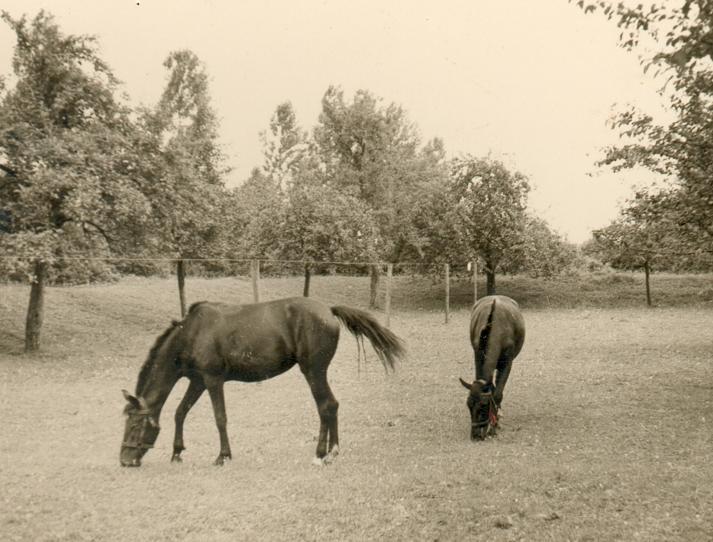 Blick auf die innere, nördliche Ecke der Hauptburg (ca. 1940). Hinter dem rechten Pferd ist der Zusammenschluß des Nordwestwalls mit dem nicht mehr vorhandenen Nordostwall erkennbar.